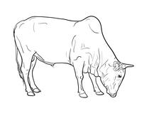 Drawing of ox Stock Illustration