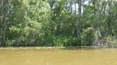 speedy drive on Honey island swamp river - stock footage