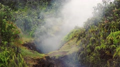 Steam Rising From Vent in Jungle at Hawaii Volcanoes National Park Stock Footage