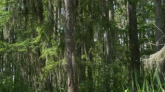 Tracking shot Louisiana swampland forest Stock Footage