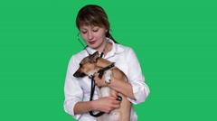 veterinarian examining dog - stock footage