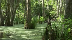 Camera tracking shot with pan in louisiana swamp Stock Footage