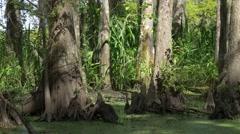 Stock Video Footage of Louisiana swampland
