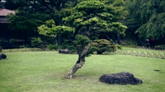 Tree at a garden Stock Footage