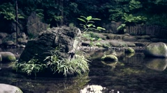 Rock in the pond Stock Footage