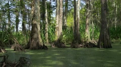 Floating leaves and forest in Honey island swamp Stock Footage