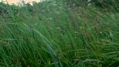 Green grass on a wind 3 Stock Footage