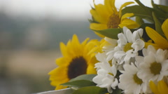 Chamomiles And  Sunflowers On The Window Sill Stock Footage