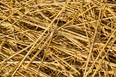 Fresh Loose Thatch Straw Material Stock Photos