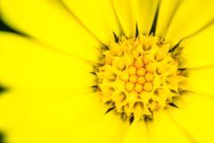 Macro closeup of a yellow flower Stamen - stock photo