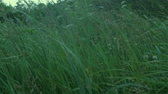 High grass wind Stock Footage