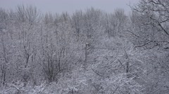 4K Frozen forest tree branch cold winter season natural woodland heavy snow fall Arkistovideo