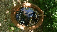 Birdbath with leaves and sunshine Stock Footage