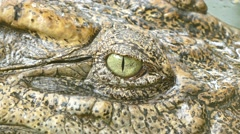 The awesome looking eye of the crocodile Stock Footage
