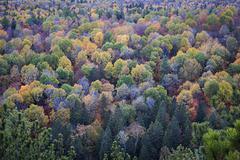 Fall treetops Stock Photos