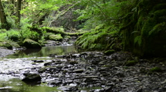 Wild stream Ehrbach next to Mosel River. Stock Footage