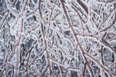 Winter branches in ice - stock photo
