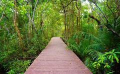 Wooden bridge to the jungle, Krabi,Thailand - stock photo