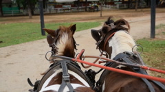 Driving a horse carriage Stock Footage