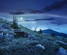 coniferous tree on a  mountain top at night - stock photo