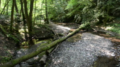 Drift wood on wild stream Ehrbach next to Mosel River. Stock Footage