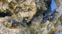 Crab On The Rock - Crab In The Sea Stock Footage