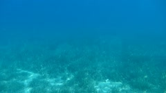 Sea Floor - Underwater Sunlight- Submarine- Ocean Floor Beautiful Stock Footage