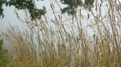 Windy gras Stock Footage
