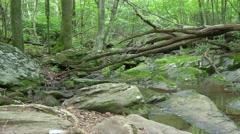 Shenandoah national park forest creek Stock Footage