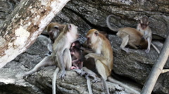 Family of macaques relaxing on logs outdoor Stock Footage