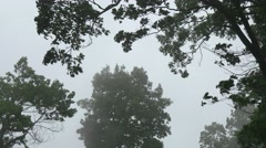 Waft of mist and trees Stock Footage