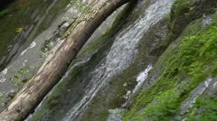 Shenandoah national park forest creek and waterfall Stock Footage