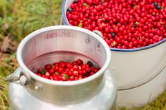 Red lingonberries in nostalgic buckets Stock Photos