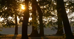 Forest Park at River Bank Meadow Along The Pond Trees' Trunks Sunset Trunks Stock Footage