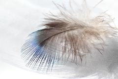 Color bird feather lying on the white paper in sunlight Stock Photos