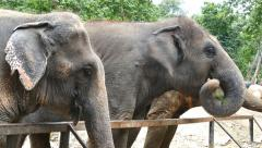 Elephant at the zoo. Stock Footage