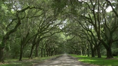 Historic Wormsloe Plantation Oak Alley - stock footage