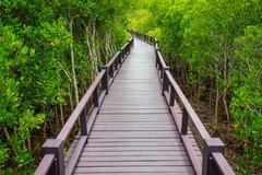 Wooden bridge to the jungle,,Thailand Stock Photos