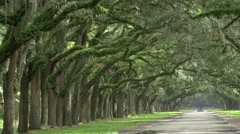 Historic Wormsloe Plantation Oak Alley Stock Footage