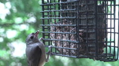 Bird feeder being used by wild life 4k - stock footage