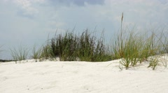 Beach vegetation in western Florida Stock Footage
