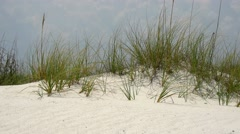 Beach vegetation road in Gulf Islands National Seashores Stock Footage