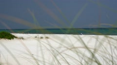 White sands in undeveloped beach shores in western Florida Stock Footage