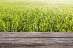 Pattern of green grass and wood floor - stock photo