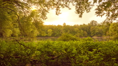 Golden Sunlight Beaming Through Trees Near Lake Stock Footage