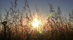 sunset grass slow motion - stock footage