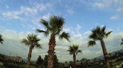Palm trees with clouds on sea promenade - stock footage