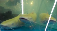 Fresh Live Fish At The Aquarium At shop Stock Footage