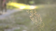 dry blade of grass beside the road - stock footage