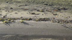 Walking on a Beach in Camouflage Waders - stock footage